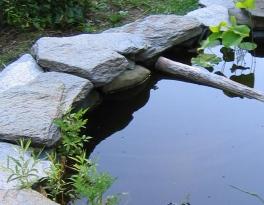 4 pond
